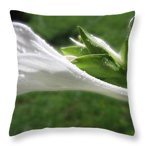 White Hosta Flower Throw Pillow featuring the photograph White Hosta Flower 46 by Maciek Froncisz