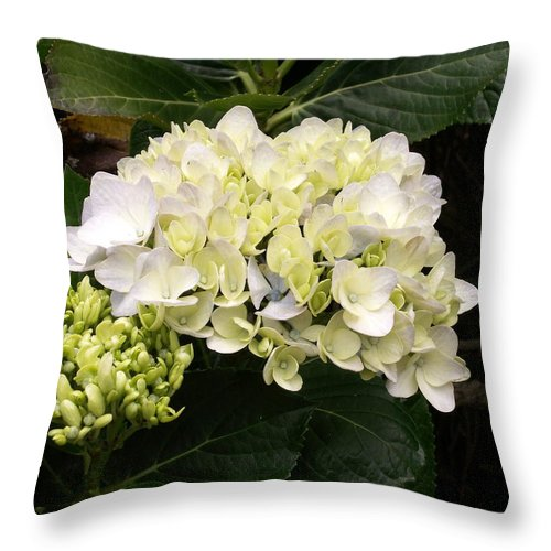 Flower Throw Pillow featuring the photograph White Hydrangeas by Amy Fose