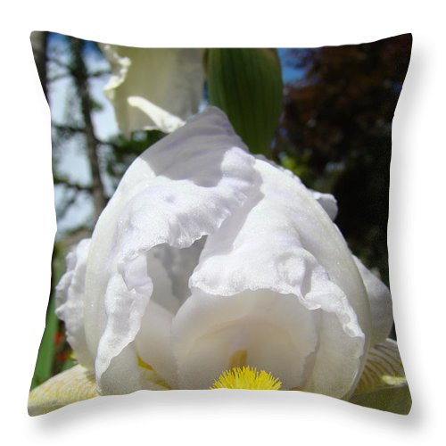 Iris Throw Pillow featuring the photograph White Iris Flower Art Prints Canvas Irises Artwork by Baslee Troutman