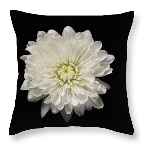 Flowers Throw Pillow featuring the photograph White by Krisjan Krafchak