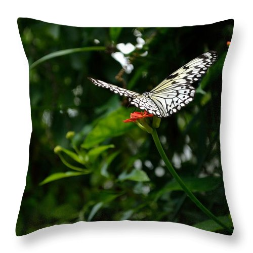 Butterfly Throw Pillow featuring the photograph White Monarch -0 by James Fowler