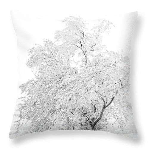 Snow Throw Pillow featuring the photograph White On White by Marilyn Hunt