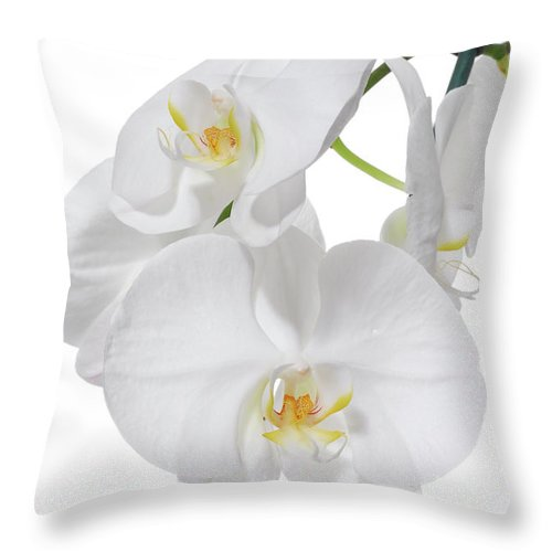 Orchid Throw Pillow featuring the photograph White Orchid by Eran Turgeman