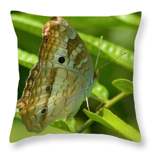 White Peacock Butterfly Throw Pillow featuring the pyrography White Peacock Butterfly 2 by Sally Sperry