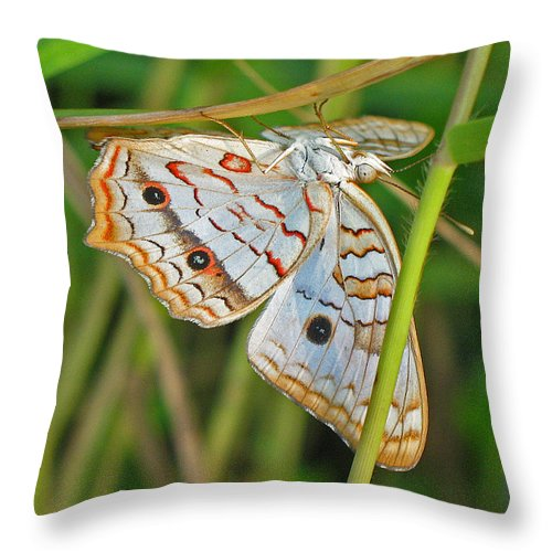 Butterfly Throw Pillow featuring the photograph White Peacock Butterfly by Kenneth Albin
