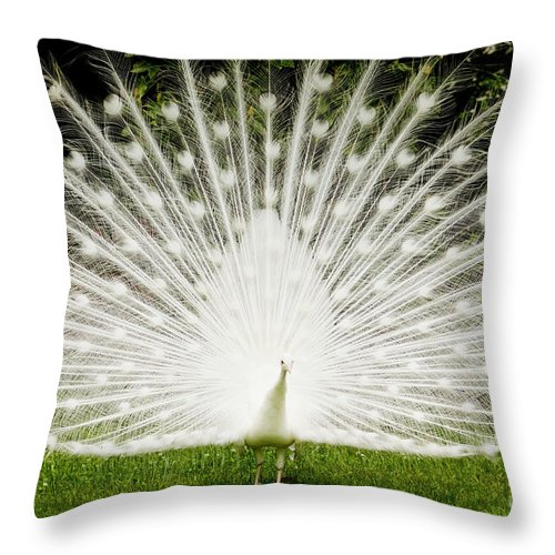 White Peacock Throw Pillow featuring the photograph White Peacock by Dustin K Ryan
