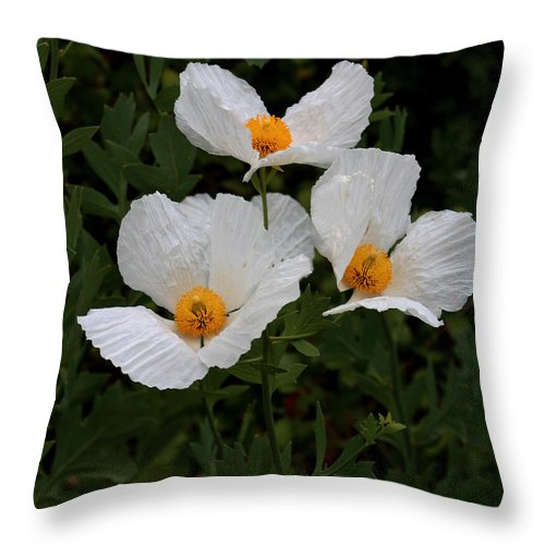 Cube Throw Pillow featuring the photograph White Poppy In Cube by Daniel Unfried