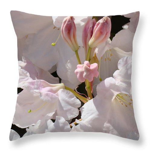 Rhodie Throw Pillow featuring the photograph White Rhodies Pink Rhododendrons Flowers Art Prints Canvas Botanical Baslee Troutman by Baslee Troutman