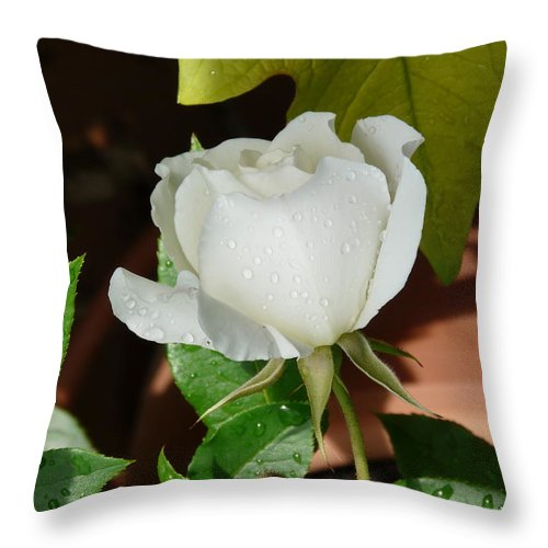Rose Throw Pillow featuring the photograph White Rose After Rain 1 by Valerie Ornstein
