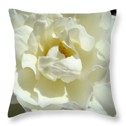 Rose Throw Pillow featuring the photograph White Rose Art Prints Summer Sunlit Roses Baslee Troutman by Baslee Troutman