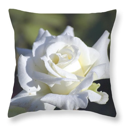 Rose Throw Pillow featuring the photograph White Rose by Kenneth Albin