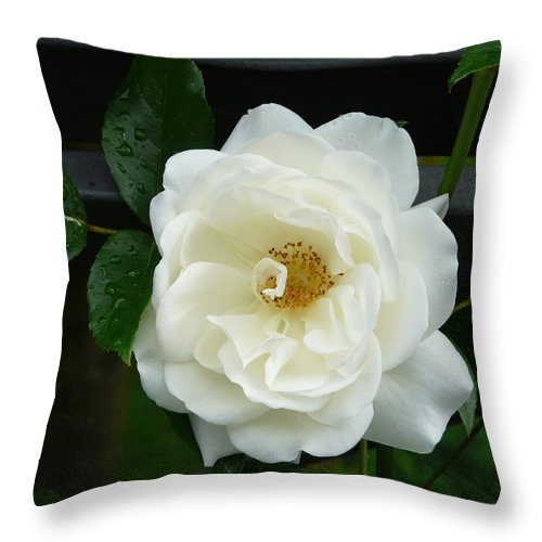 Rose Throw Pillow featuring the photograph White Rose by Valerie Ornstein