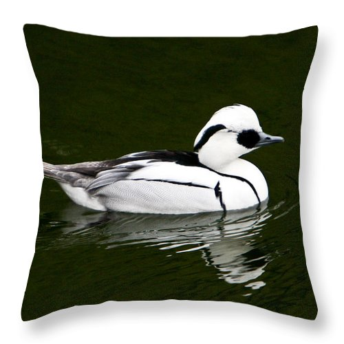 White Throw Pillow featuring the photograph White Smew Duck On Silver Pond by Douglas Barnett