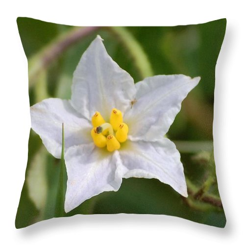 Digital Photo Throw Pillow featuring the photograph White Star by David Lane