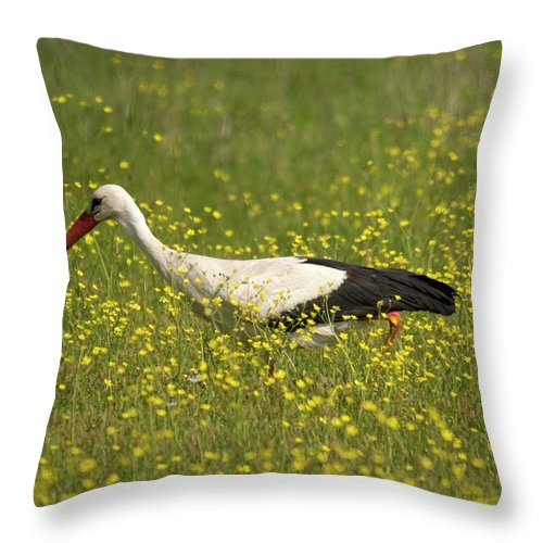 White Storks Throw Pillow featuring the photograph White Stork Looking For Frogs by Cliff Norton