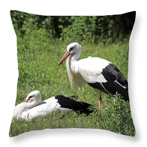 Bird Throw Pillow featuring the photograph White Storks by Teresa Zieba