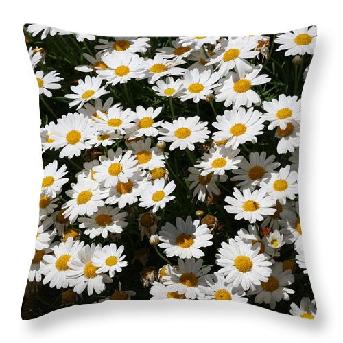 White Throw Pillow featuring the photograph White Summer Daisies by Christine Till