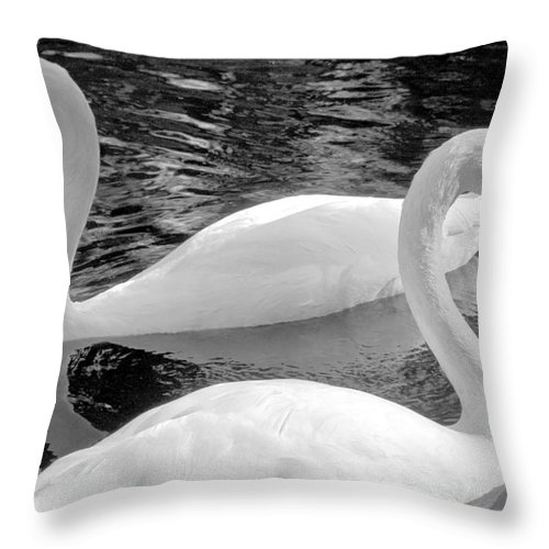 Swan Throw Pillow featuring the photograph White Swans by David Lee Thompson