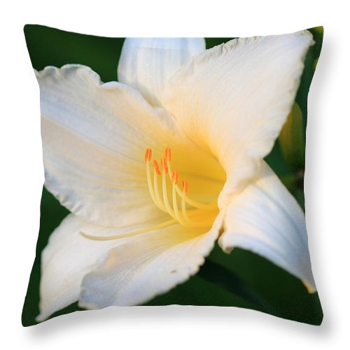 White Temptation Lily Throw Pillow featuring the photograph White Temptation Lily by Angela Murdock