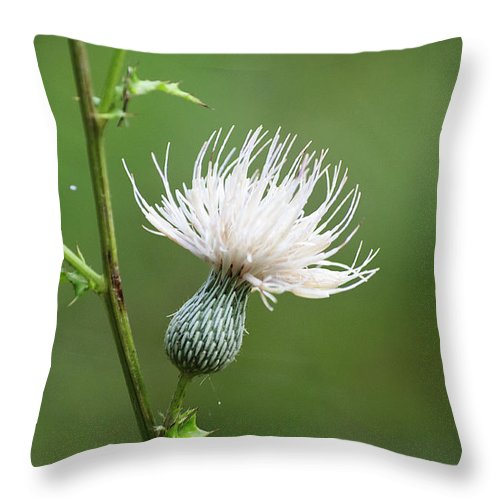 Thistle Throw Pillow featuring the photograph White Thistle Flower by Kenneth Albin