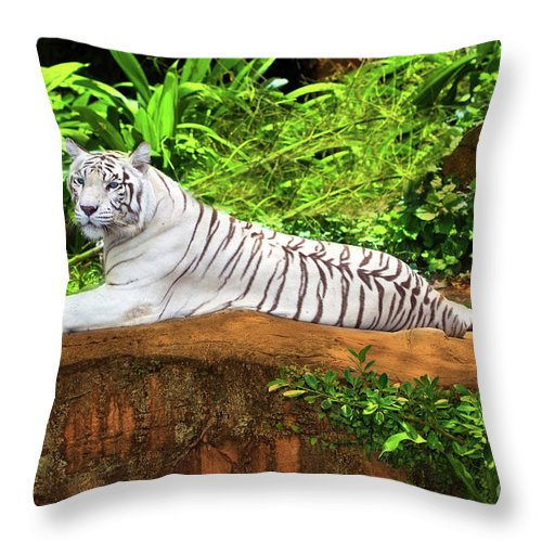 Tiger Throw Pillow featuring the photograph White Tiger by MotHaiBaPhoto Prints