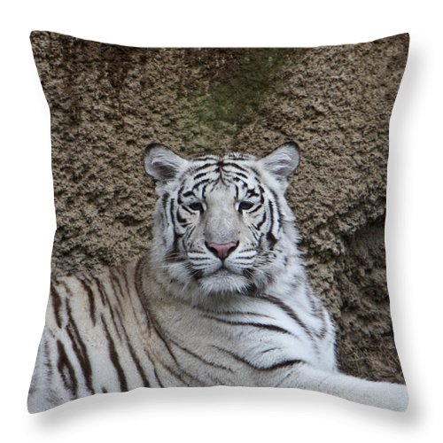 White Throw Pillow featuring the photograph White Tiger Resting by Douglas Barnett