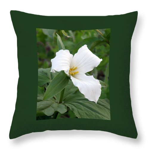 Trillium Throw Pillow featuring the photograph White Trillium by Jean Hall