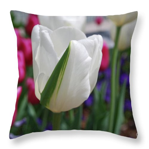 Tulip Throw Pillow featuring the photograph White Tulip With A Green Stripe In A Garden by DejaVu Designs