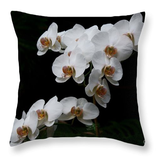 Phylanopsis Orchid Throw Pillow featuring the photograph White Velvet by Joanne Smoley