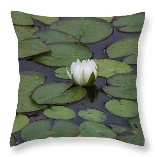 Flower Throw Pillow featuring the photograph White Water Lily by Janice Keener