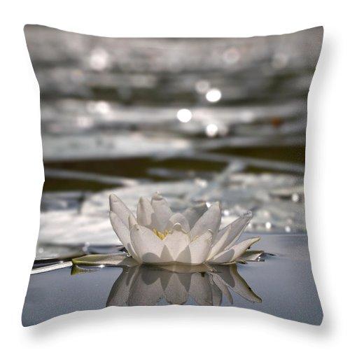 Lehtokukka Throw Pillow featuring the photograph White Waterlily 3 by Jouko Lehto