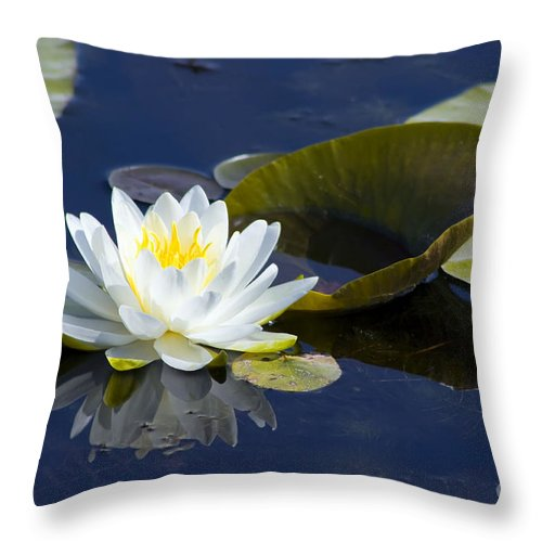 Flower Throw Pillow featuring the photograph White Waterlily by Teresa Zieba