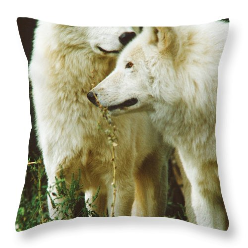 Wolves Throw Pillow featuring the photograph White Wolf Pair by Steve Somerville