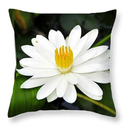 White Throw Pillow featuring the photograph White Wonder by David Lee Thompson