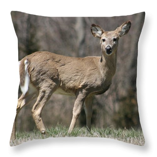Animal Throw Pillow featuring the photograph Whitetail Profile 1 by David Dunham