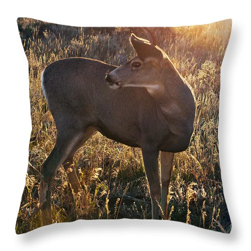 Jackson Hole Throw Pillow featuring the photograph Who Is Back There by Bob Phillips