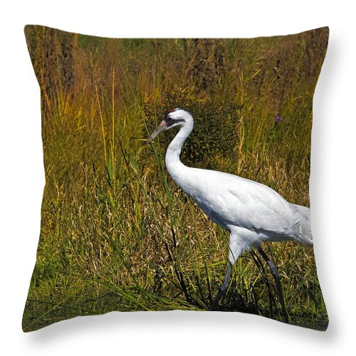 whooping Crane Throw Pillow featuring the photograph Whooping Crane by Al Mueller