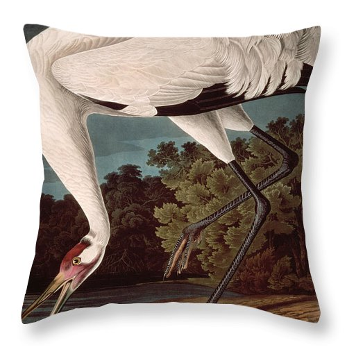 Crane Throw Pillow featuring the painting Whooping Crane by John James Audubon