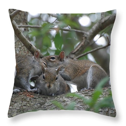 Squirrel Throw Pillow featuring the photograph Why Me by Rob Hans