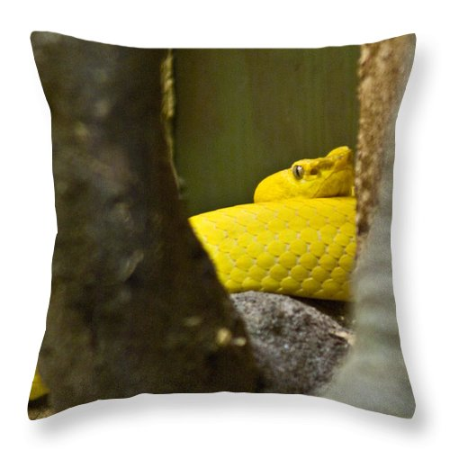 Yellow Throw Pillow featuring the photograph Wicked Snake by Douglas Barnett
