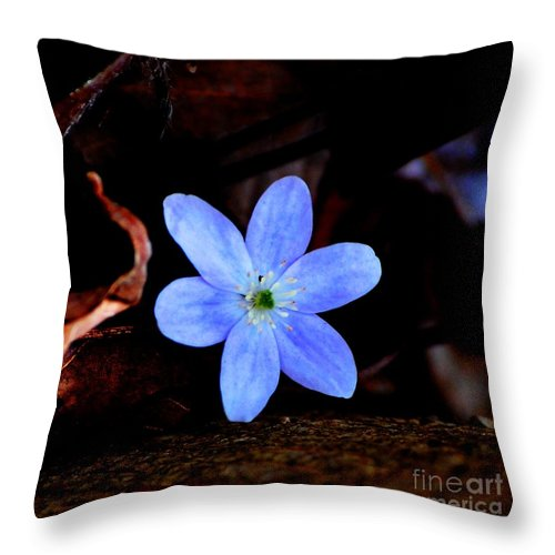 Digital Photo Throw Pillow featuring the photograph Wild Blue by David Lane