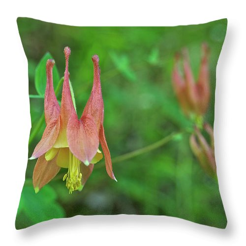 Columbine Throw Pillow featuring the photograph Wild Columbine by Michael Peychich
