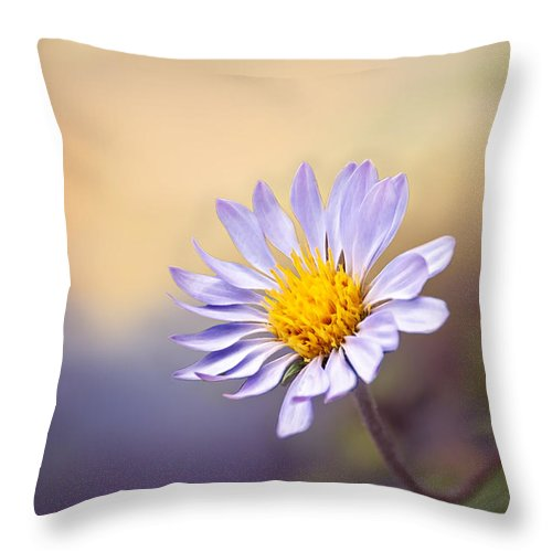 Blossom Throw Pillow featuring the photograph Lone Flower by Maria Coulson