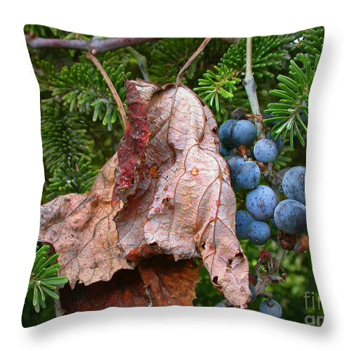 Grapes Throw Pillow featuring the photograph Wild Grapes by Edward Sobuta