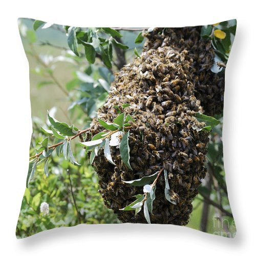 High Virginia Images Throw Pillow featuring the photograph Wild Honey Bees by Randy Bodkins