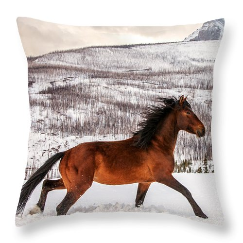 Wild; Horse; Animal; Running; Through; Snow; Mountains; Rocky Mountains; Glacier National Park; Browning; Montana; Mt; Outdoor; Winter; Snow; Snowy; Christmas; Side View; Feral; Wildlife; Stallion; Quarter Horse; Gallop; Galloping; Running; Cute; Beautiful; Blackfeet Nation; Horizontal; Copy Space; Clouds; Sky; Cloudy; Wilderness; Rural; Country; Countryside; Red; Brown; Forest; Action; Equine; Behavior; Wild West; Western; Native American; Nature; Cold; Free Roaming; Beauty; Motion; Best Throw Pillow featuring the photograph Wild Horse by Todd Klassy