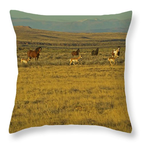 Horses Throw Pillow featuring the photograph Wild Horses And Antelope-signed-#2216 by J L Woody Wooden