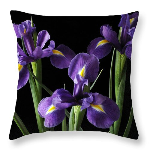 Iris Throw Pillow featuring the photograph Wild Iris by Nancy Griswold