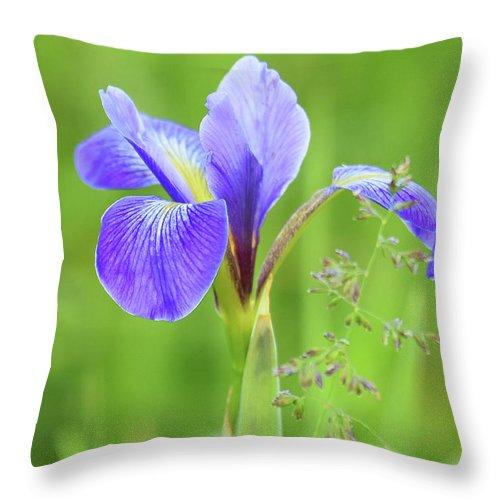Wild Iris Throw Pillow featuring the photograph Wild Iris by Sally Sperry