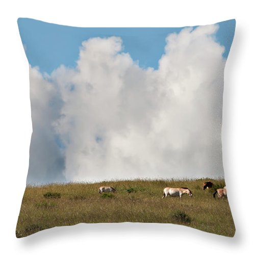 Asia Throw Pillow featuring the photograph Wild Mongolian Horses by Alan Toepfer